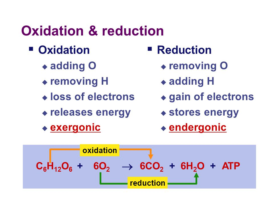 Coupling oxidation & reduction  REDOX reactions in respiration  release energy as breakdown organic molecules  break C-C bonds  strip off electrons from C-H bonds by removing H atoms  C 6 H 12 O 6  CO 2 = the fuel has been oxidized  electrons attracted to more electronegative atoms  in biology, the most electronegative atom.