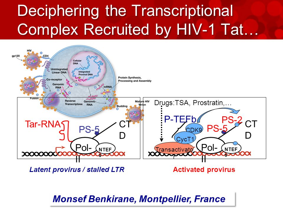 Deciphering the Transcriptional Complex Recruited by HIV-1 Tat… Pol- II Tar-RNACT D PS-5 NTEF s Latent provirus / stalled LTR Pol- II CT D PS-5 Transactivato r CDK9 CycT1 PS-2 P-TEFb NTEF s Drugs:TSA, Prostratin,… Activated provirus Monsef Benkirane, Montpellier, France