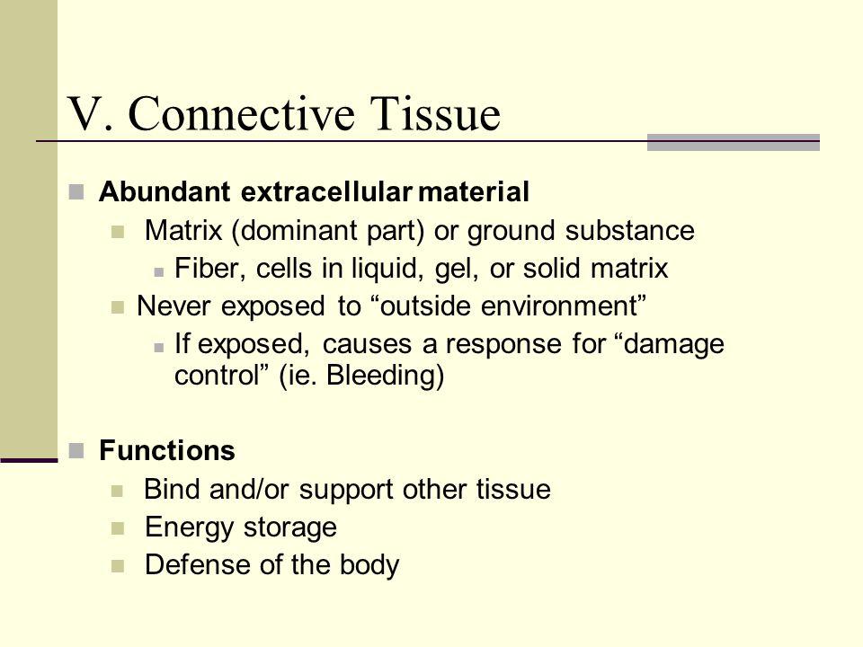 V. Connective Tissue Abundant extracellular material Matrix (dominant part) or ground substance Fiber, cells in liquid, gel, or solid matrix Never exp