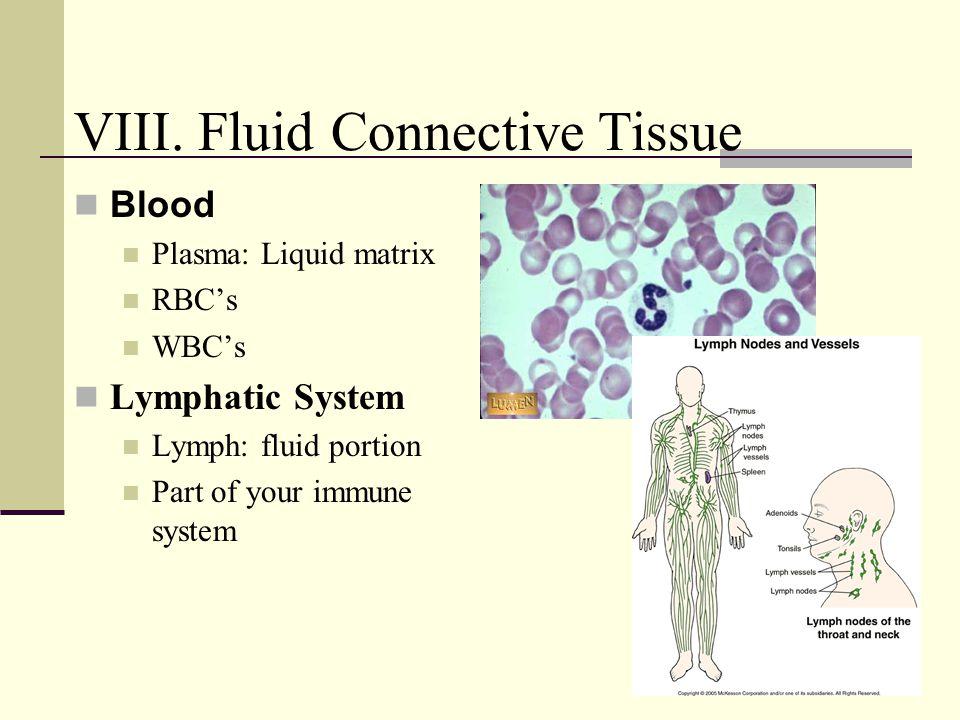 Blood Plasma: Liquid matrix RBC's WBC's Lymphatic System Lymph: fluid portion Part of your immune system VIII. Fluid Connective Tissue