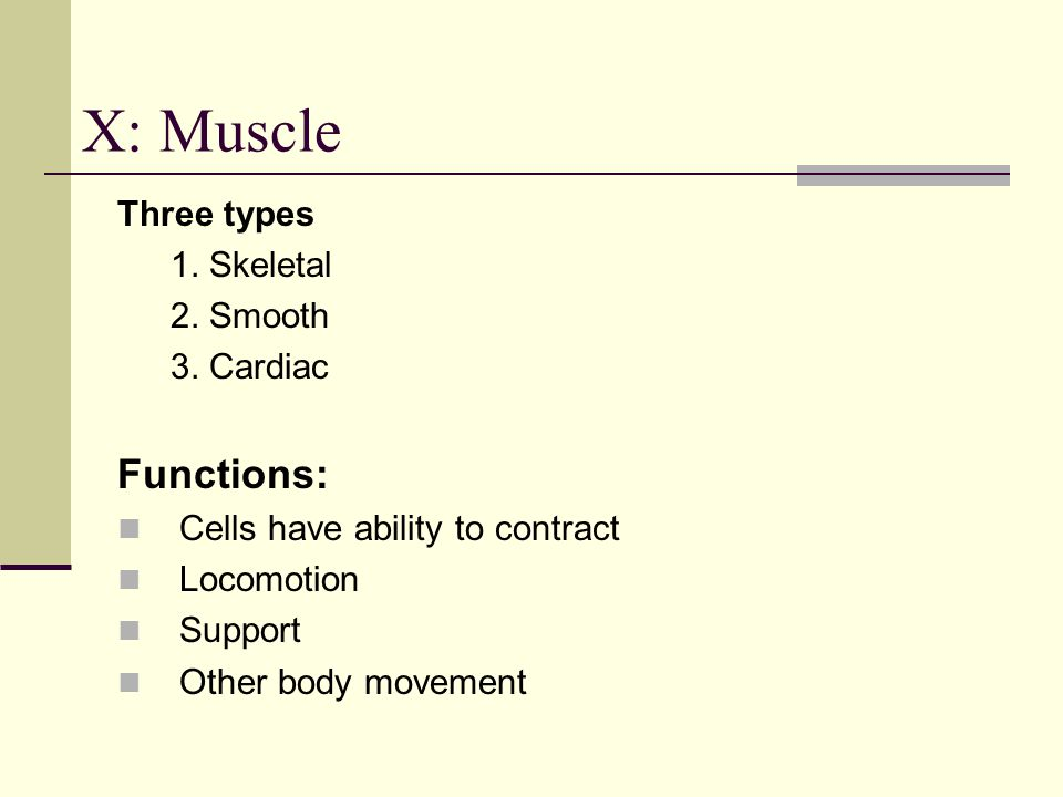 Three types 1. Skeletal 2. Smooth 3. Cardiac Functions: Cells have ability to contract Locomotion Support Other body movement X: Muscle