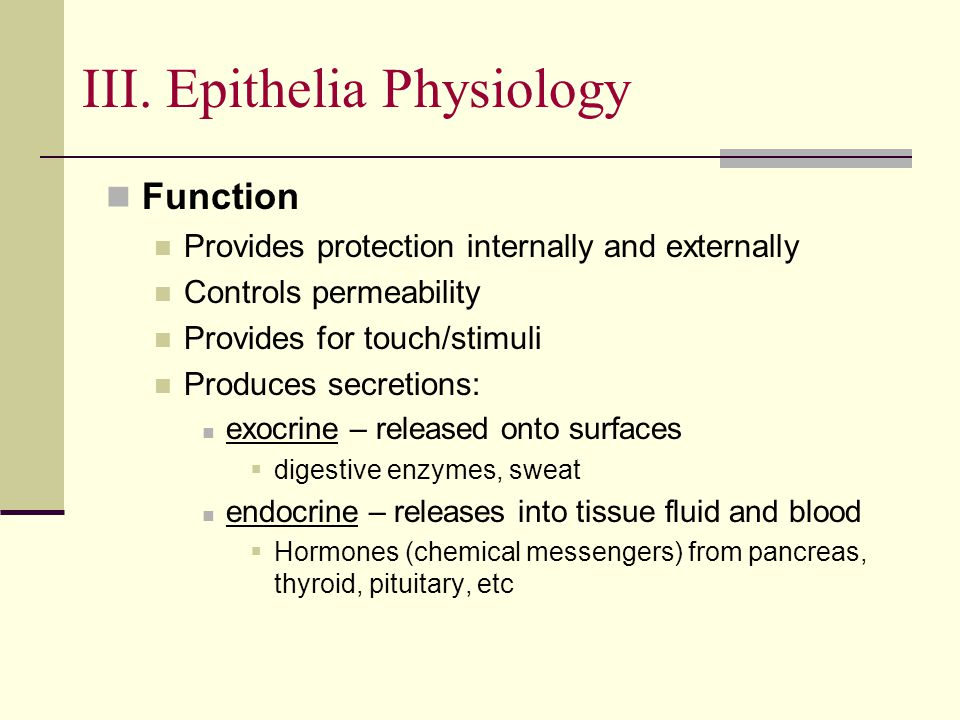 III. Epithelia Physiology Function Provides protection internally and externally Controls permeability Provides for touch/stimuli Produces secretions: