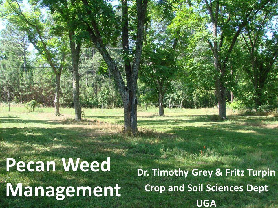 Pecan Weed Management Dr. Timothy Grey & Fritz Turpin Crop and Soil Sciences Dept UGA
