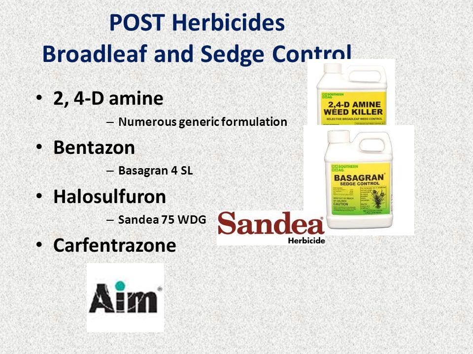 2, 4-D amine – Numerous generic formulation Bentazon – Basagran 4 SL Halosulfuron – Sandea 75 WDG Carfentrazone – Aim POST Herbicides Broadleaf and Sedge Control