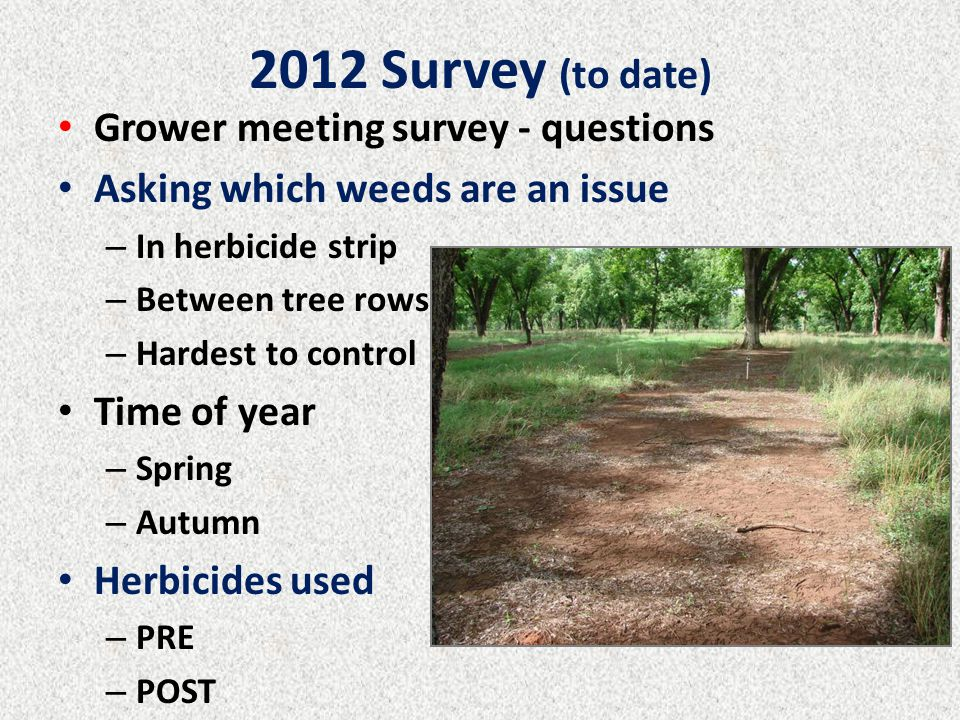 2012 Survey (to date) Grower meeting survey - questions Asking which weeds are an issue – In herbicide strip – Between tree rows – Hardest to control