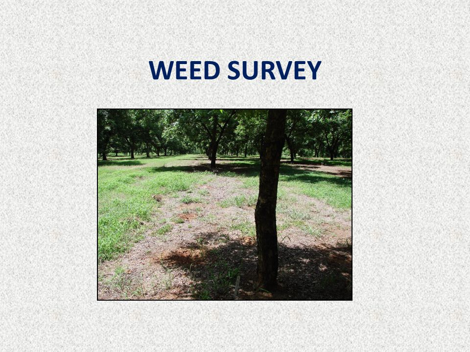 WEED SURVEY