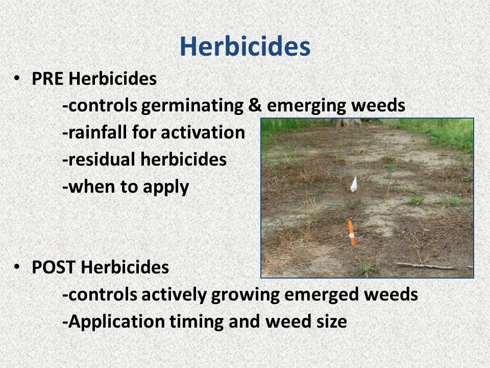 Herbicides PRE Herbicides -controls germinating & emerging weeds -rainfall for activation -residual herbicides -when to apply POST Herbicides -control