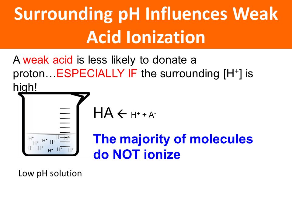 A weak acid is less likely to donate a proton…ESPECIALLY IF the surrounding [H + ] is high! Surrounding pH Influences Weak Acid Ionization HA  H + +