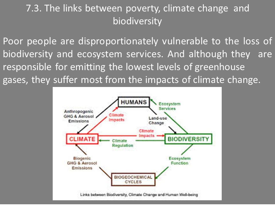 7.3. The links between poverty, climate change and biodiversity Poor people are disproportionately vulnerable to the loss of biodiversity and ecosyste