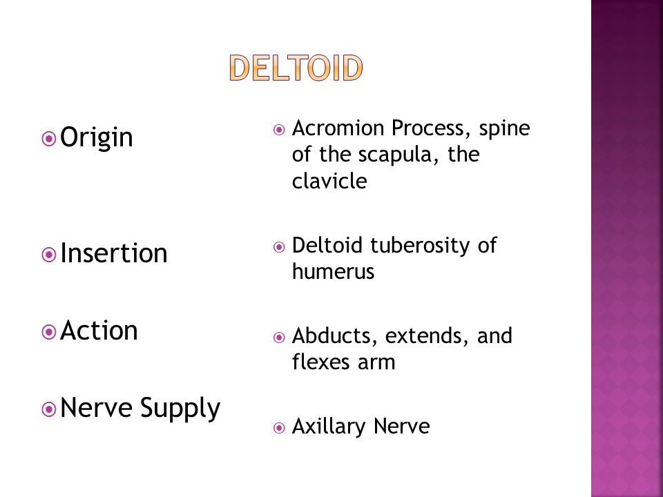  Origin  Insertion  Action  Nerve Supply  Acromion Process, spine of the scapula, the clavicle  Deltoid tuberosity of humerus  Abducts, extends, and flexes arm  Axillary Nerve