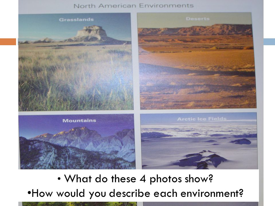 What do these 4 photos show? How would you describe each environment?