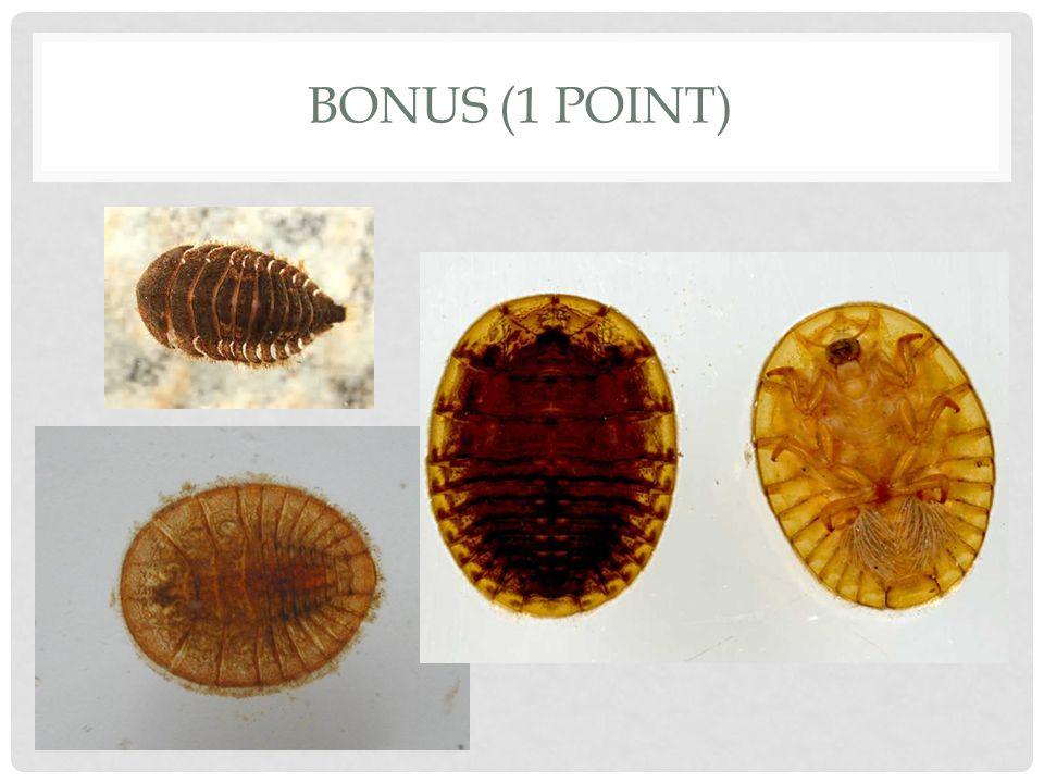 BONUS (1 POINT)
