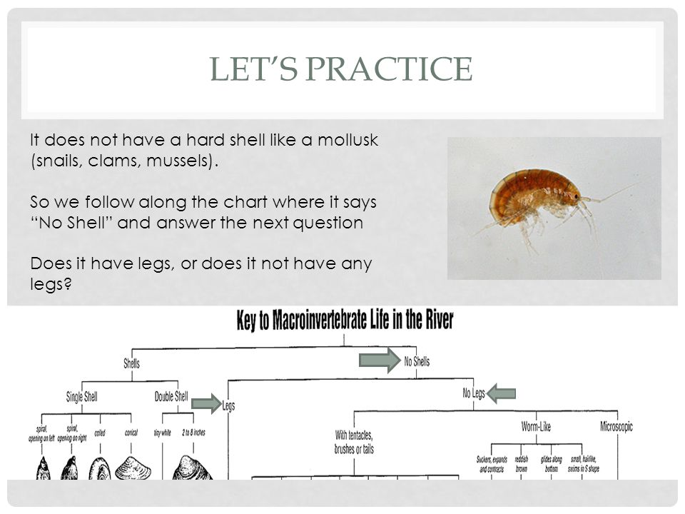 LET'S PRACTICE It does not have a hard shell like a mollusk (snails, clams, mussels).