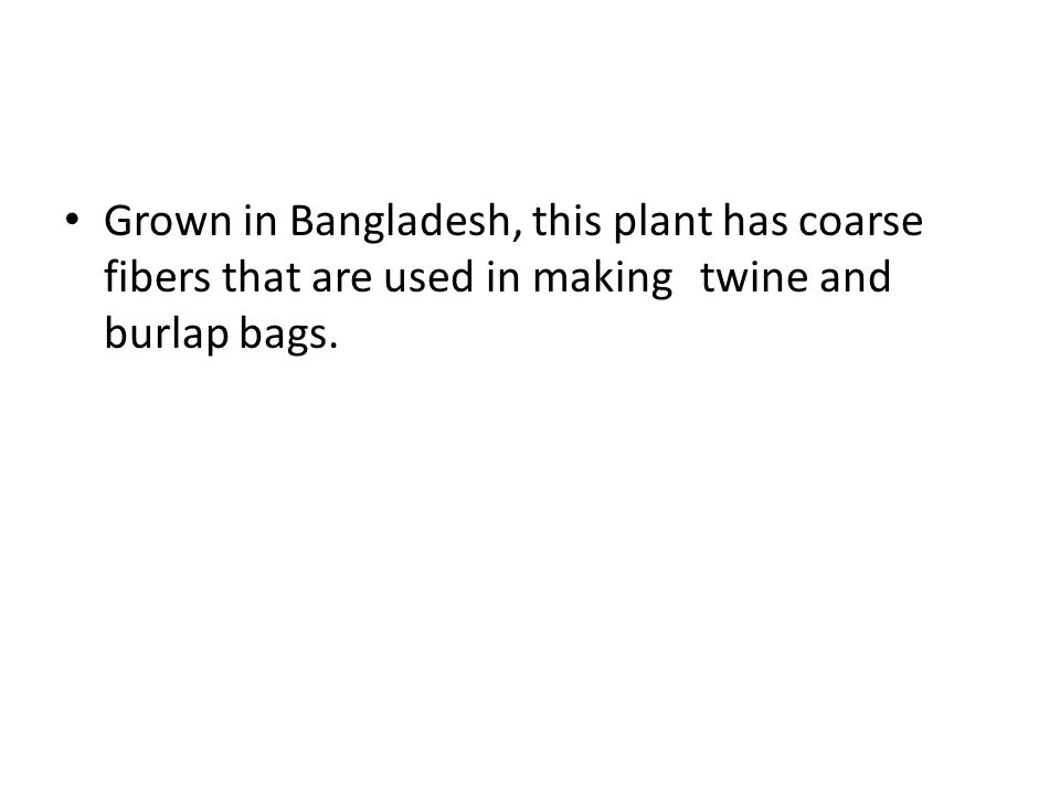 Grown in Bangladesh, this plant has coarse fibers that are used in making twine and burlap bags.
