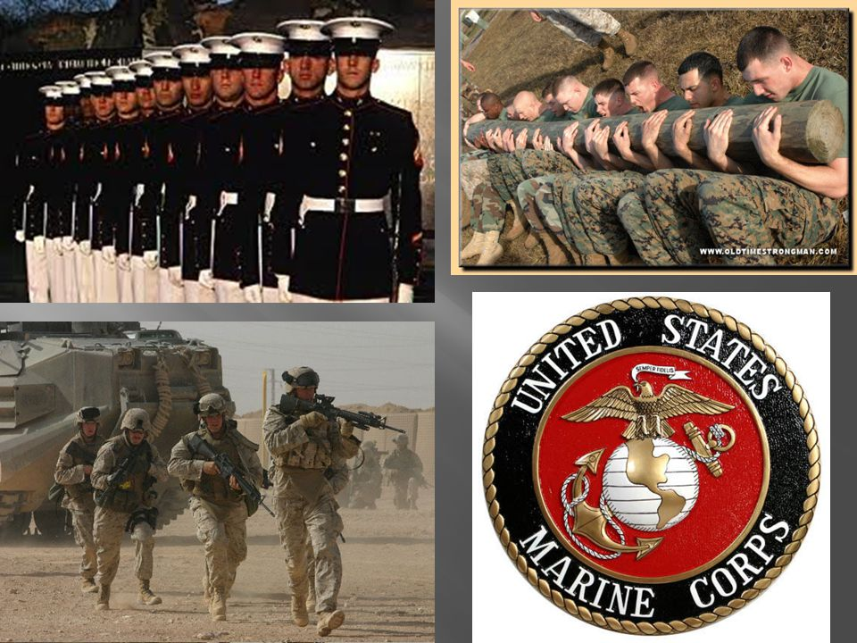  The Marines are the oldest U.S.military branch.