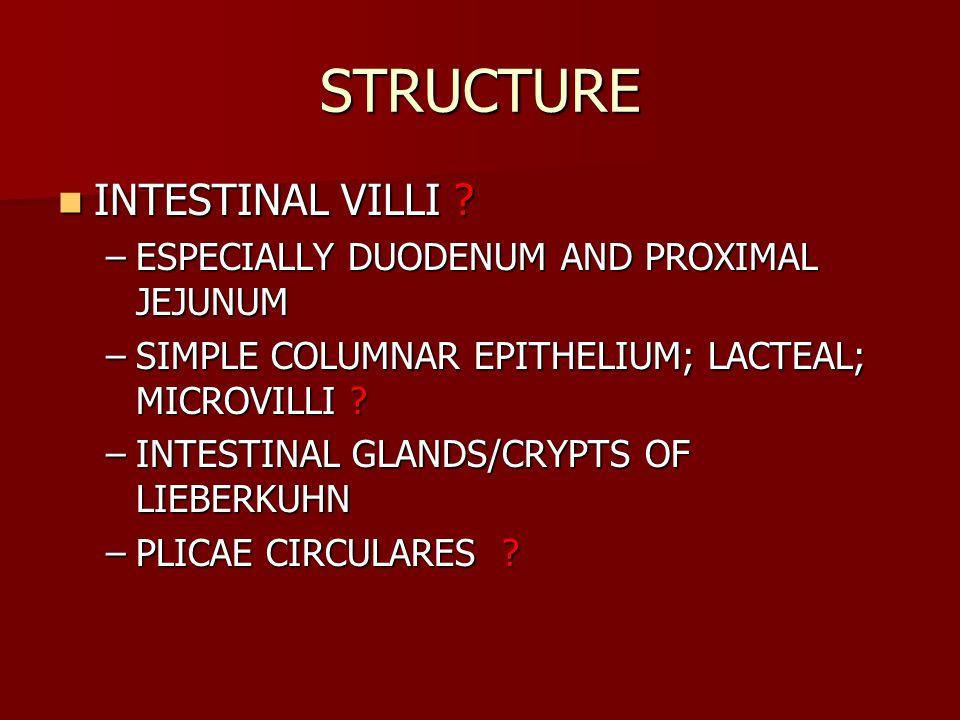 STRUCTURE INTESTINAL VILLI .INTESTINAL VILLI .