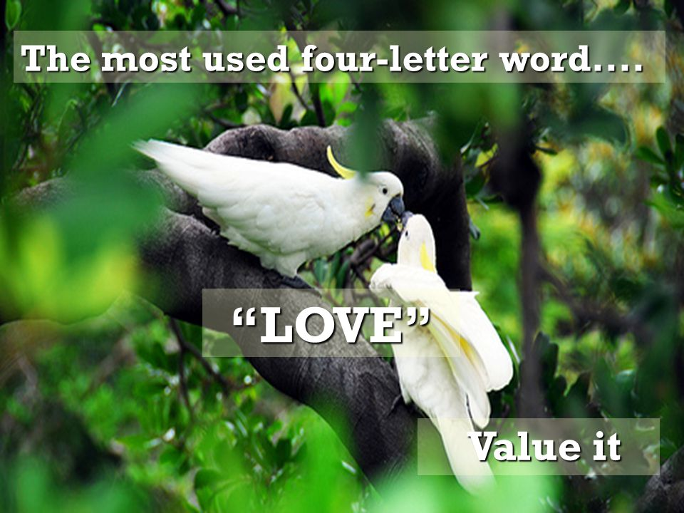 The most used four-letter word.... Value it Value it LOVE