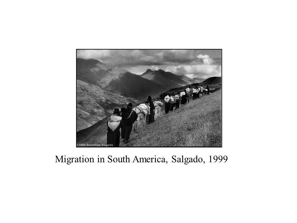 Migration in South America, Salgado, 1999