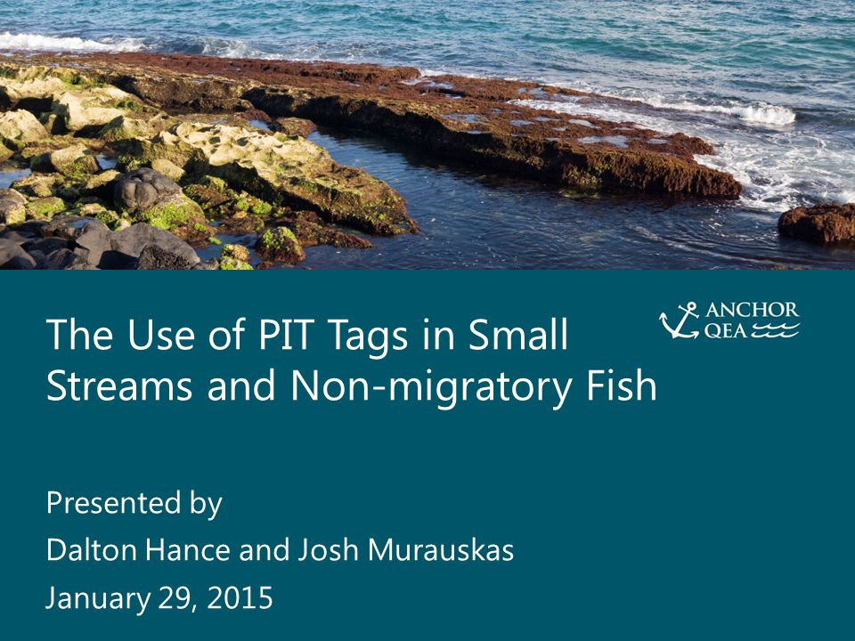 The Use of PIT Tags in Small Streams and Non-migratory Fish Presented By Dalton Hance and Josh Murauskas 2 PIT Tags in Migratory Fish The beauty of asymmetry: no looking back Detection events are instantaneous If you never see 'em again, it's probably because they're dead Schematic courtesy of SURPH 3.5 user manual.