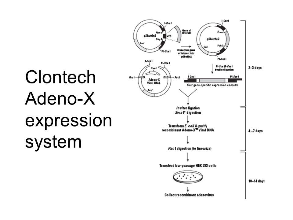 Clontech Adeno-X expression system