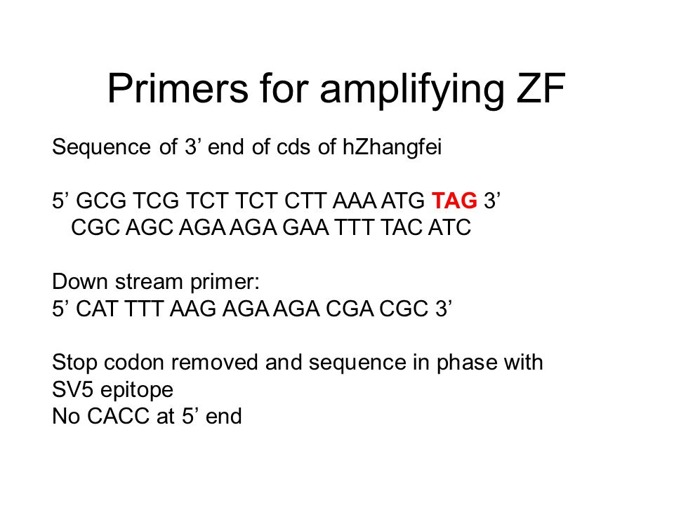 Primers for amplifying ZF Sequence of 3' end of cds of hZhangfei 5' GCG TCG TCT TCT CTT AAA ATG TAG 3' CGC AGC AGA AGA GAA TTT TAC ATC Down stream pri