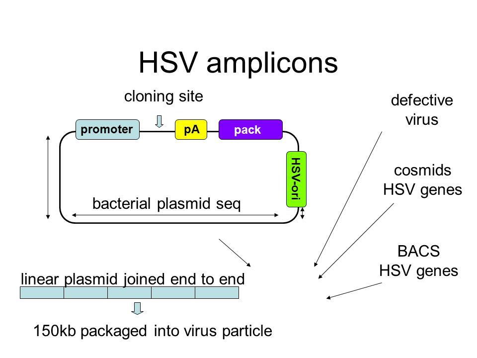 HSV amplicons promoterpA pack HSV-ori bacterial plasmid seq cloning site defective virus cosmids HSV genes BACS HSV genes linear plasmid joined end to end 150kb packaged into virus particle