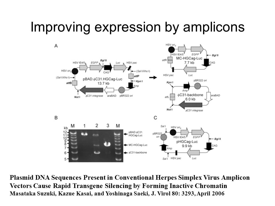 Improving expression by amplicons Plasmid DNA Sequences Present in Conventional Herpes Simplex Virus Amplicon Vectors Cause Rapid Transgene Silencing