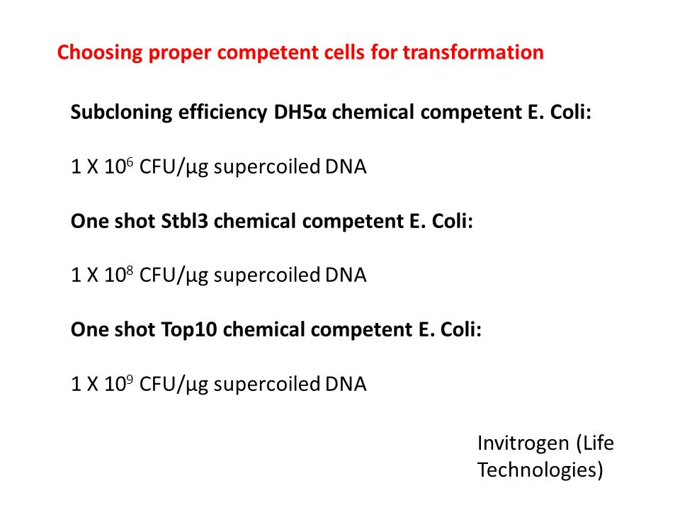 Choosing proper competent cells for transformation Subcloning efficiency DH5α chemical competent E. Coli: 1 X 10 6 CFU/µg supercoiled DNA One shot Stb