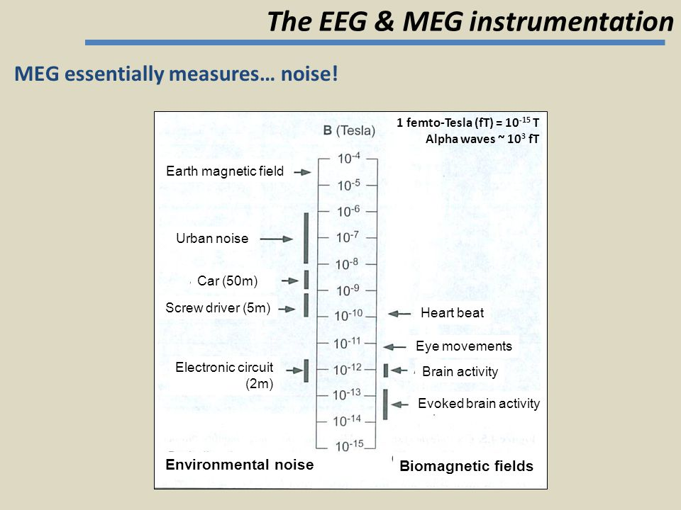 MEG essentially measures… noise! The EEG & MEG instrumentation Heart beat Eye movements Brain activity Evoked brain activity Biomagnetic fields Earth
