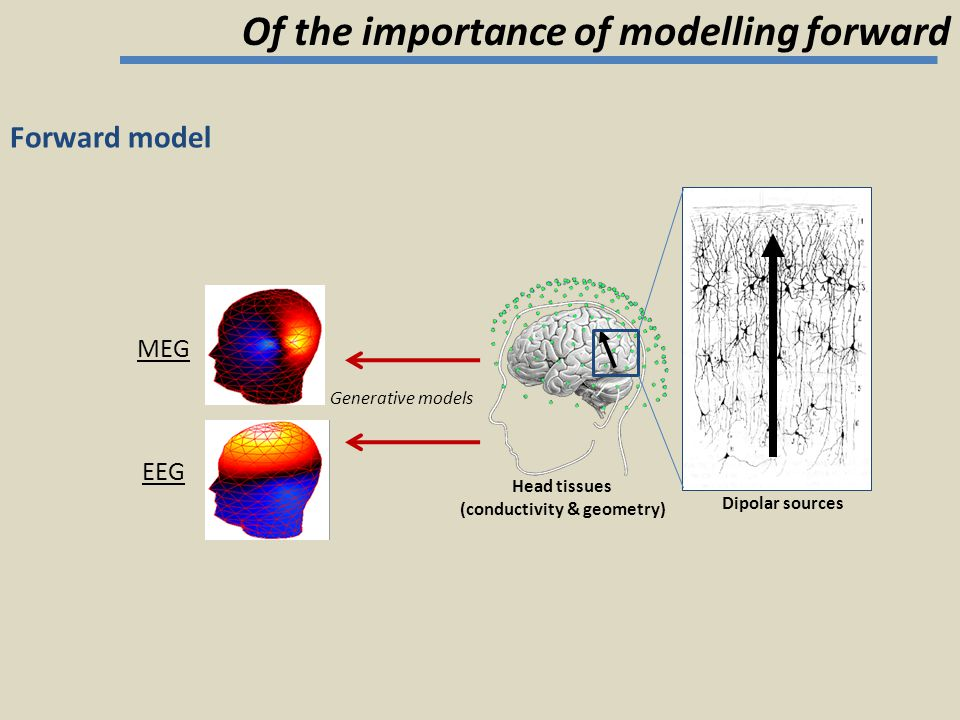 Forward model Generative models MEG EEG Dipolar sources Head tissues (conductivity & geometry) Of the importance of modelling forward