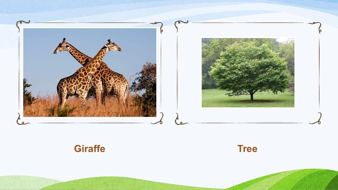 GiraffeTree