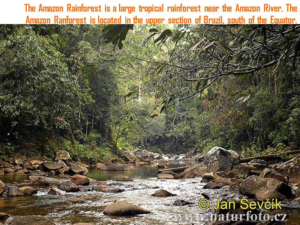 The Amazon Rainforest is a large tropical rainforest near the Amazon River.
