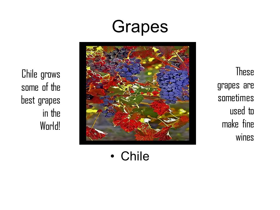 Grapes Chile Chile grows some of the best grapes in the World.