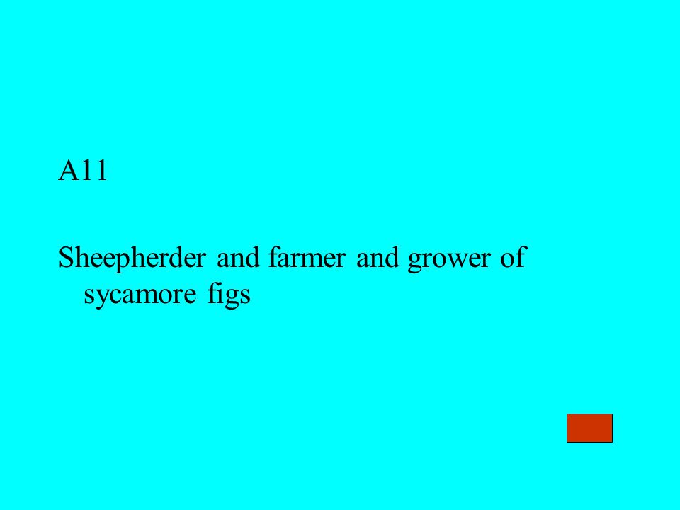 A11 Sheepherder and farmer and grower of sycamore figs