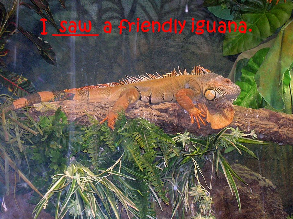 I _____ a friendly iguana. saw