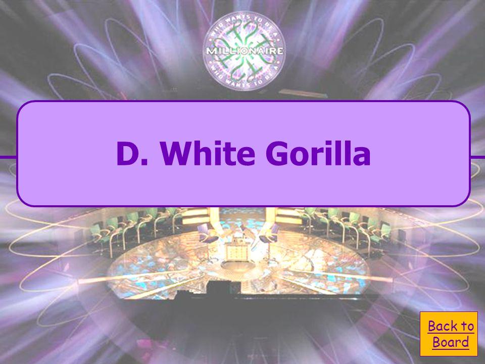  D. White Gorilla D. White Gorilla What was Copito de Nieve?  A. Koala A. Koala  C. Bear C. Bear  B. Black Monkey B. Black Monkey