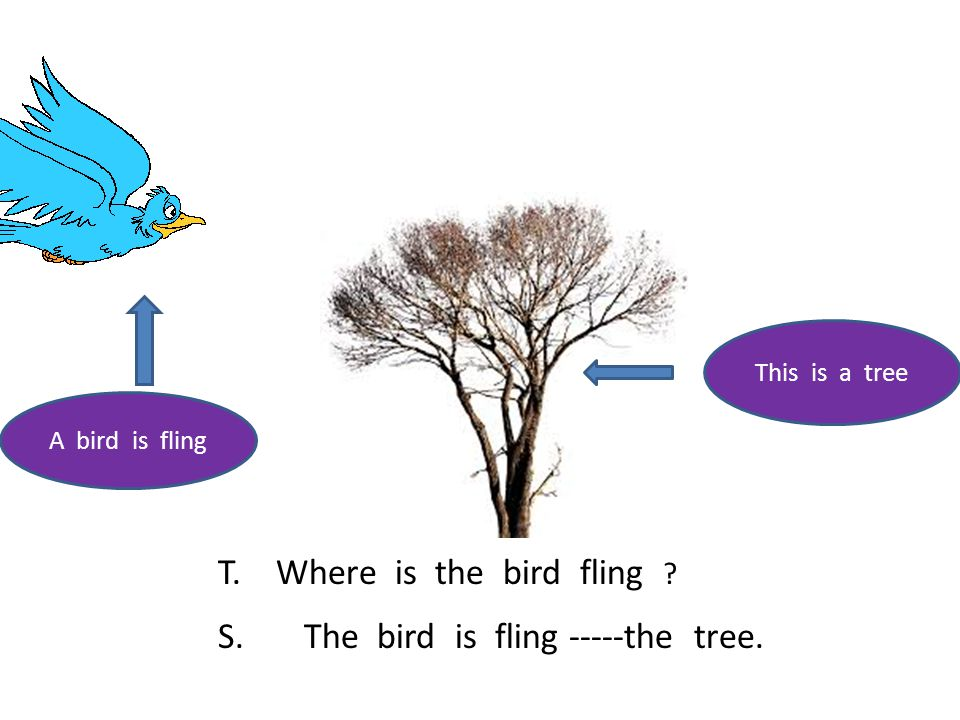A bird is fling This is a tree T. Where is the bird fling ? S. The bird is fling -----the tree.