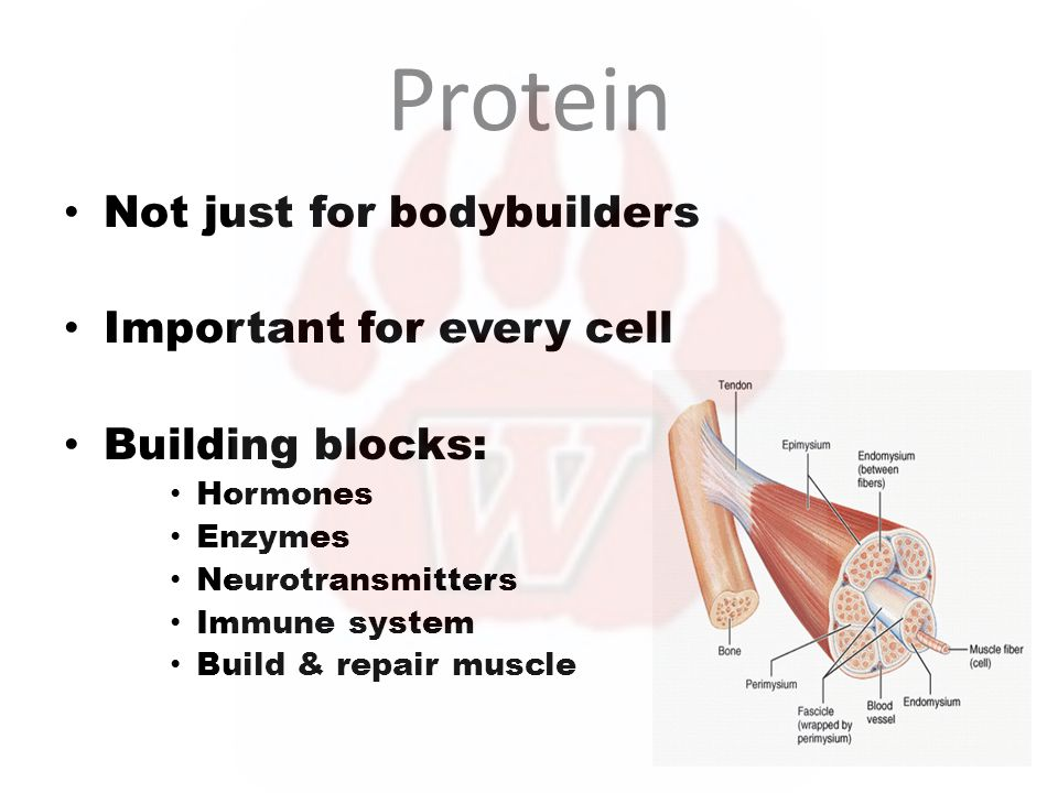 Protein Not just for bodybuilders Important for every cell Building blocks: Hormones Enzymes Neurotransmitters Immune system Build & repair muscle