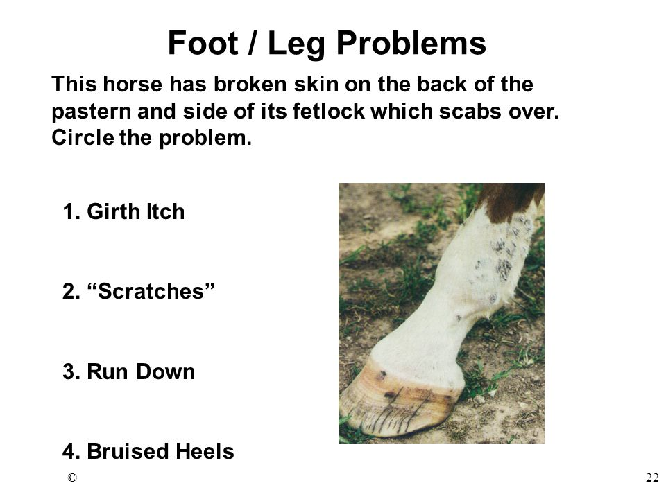 ©22 Foot / Leg Problems This horse has broken skin on the back of the pastern and side of its fetlock which scabs over. Circle the problem. 1. Girth I