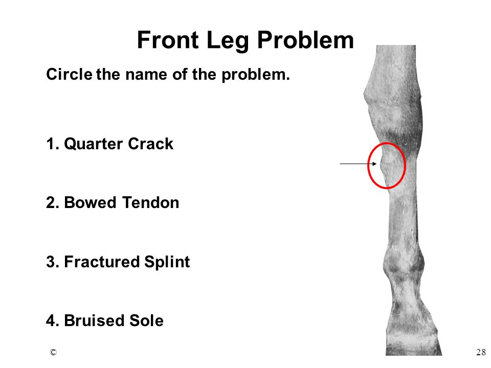 ©28 Front Leg Problem Circle the name of the problem.