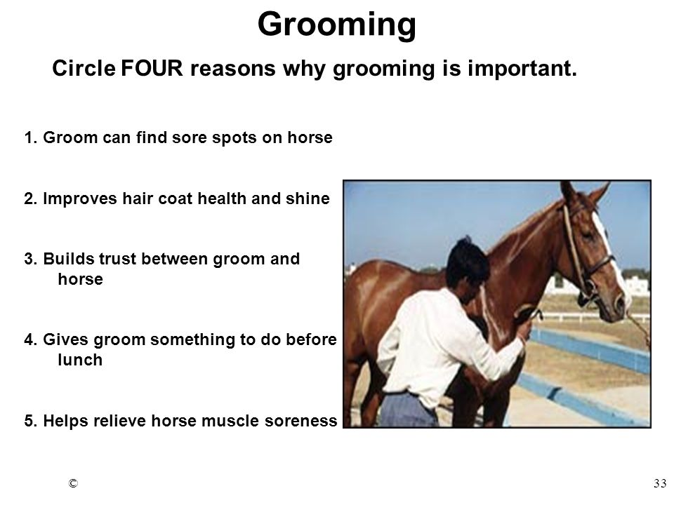 ©33 Grooming Circle FOUR reasons why grooming is important. 1. Groom can find sore spots on horse 2. Improves hair coat health and shine 3. Builds tru