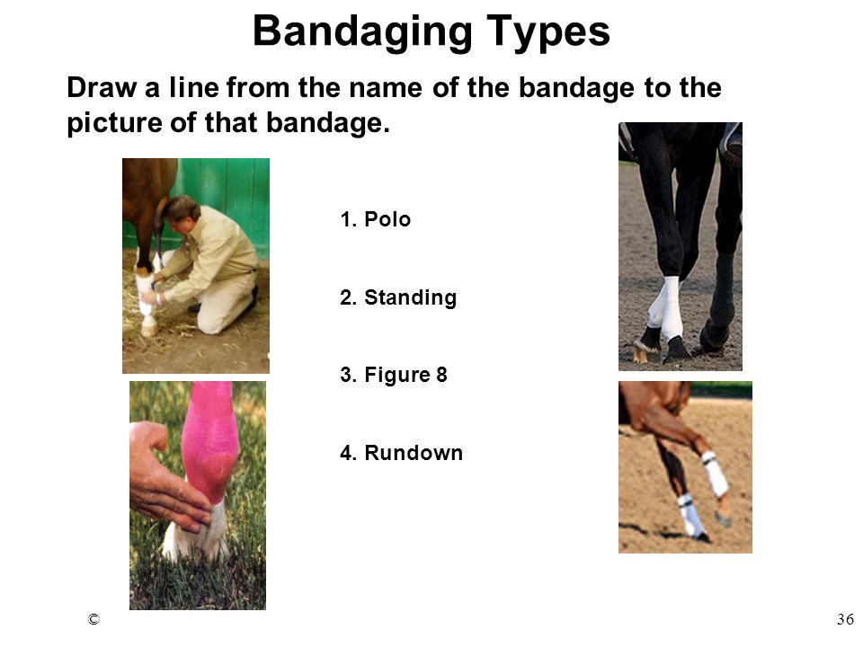 ©36 Bandaging Types Draw a line from the name of the bandage to the picture of that bandage. 1. Polo 2. Standing 3. Figure 8 4. Rundown