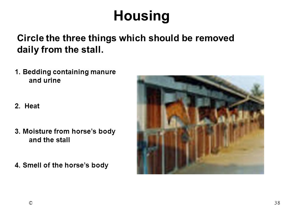 ©38 Housing Circle the three things which should be removed daily from the stall.