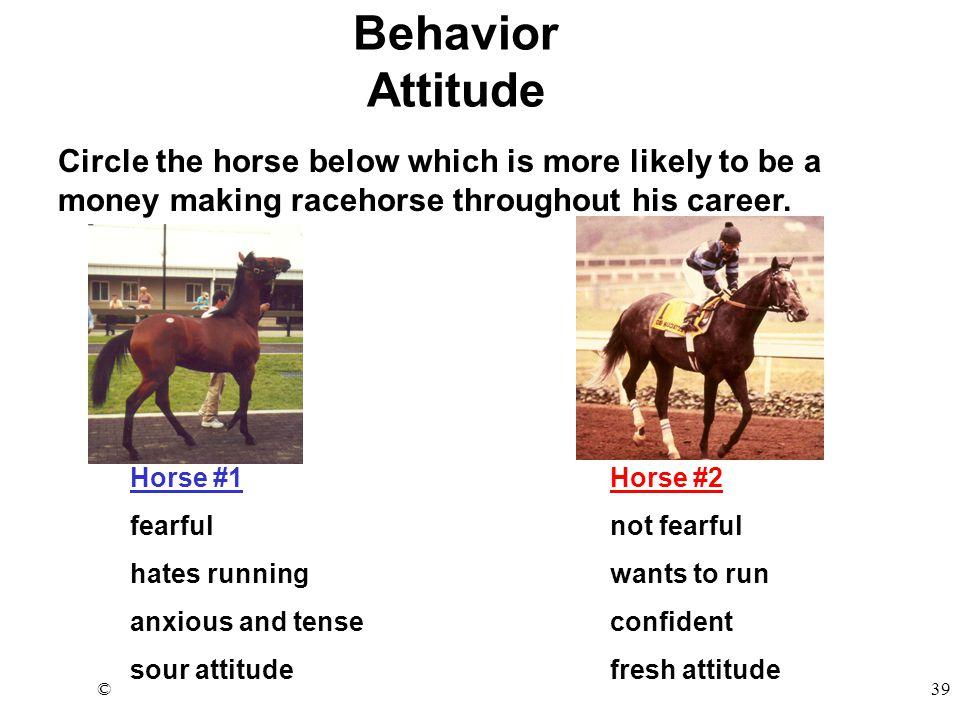 ©39 Horse #1Horse #2 fearfulnot fearful hates runningwants to run anxious and tenseconfident sour attitudefresh attitude Behavior Attitude Circle the