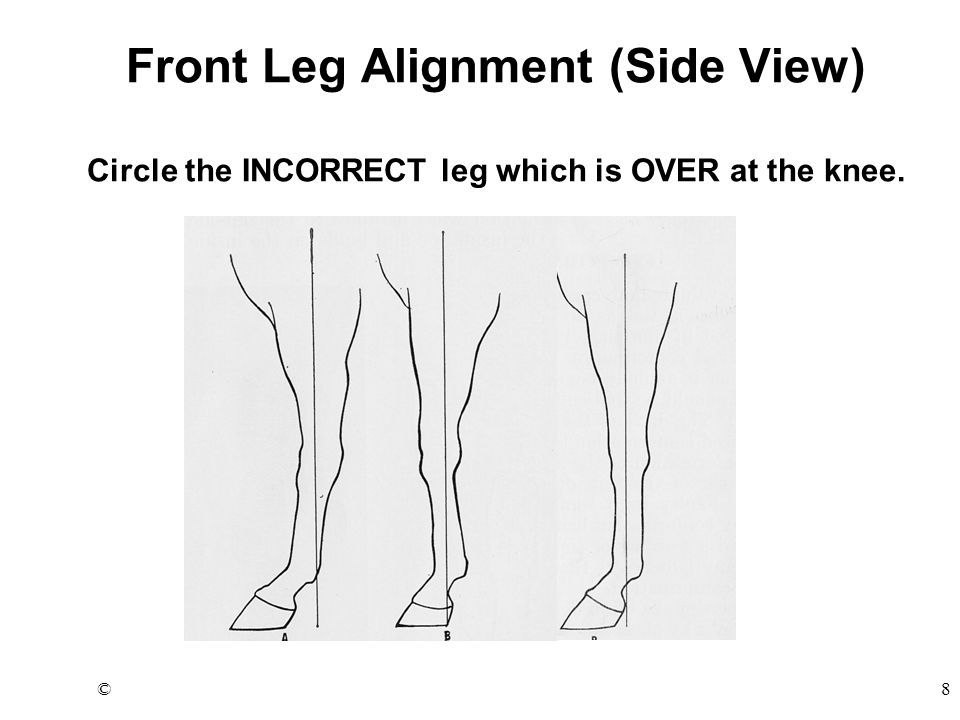 ©8 Front Leg Alignment (Side View) Circle the INCORRECT leg which is OVER at the knee.