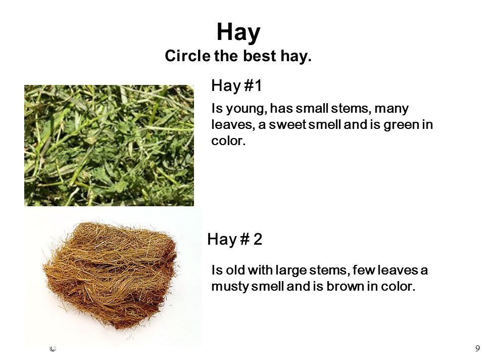 ©9 Hay Circle the best hay.