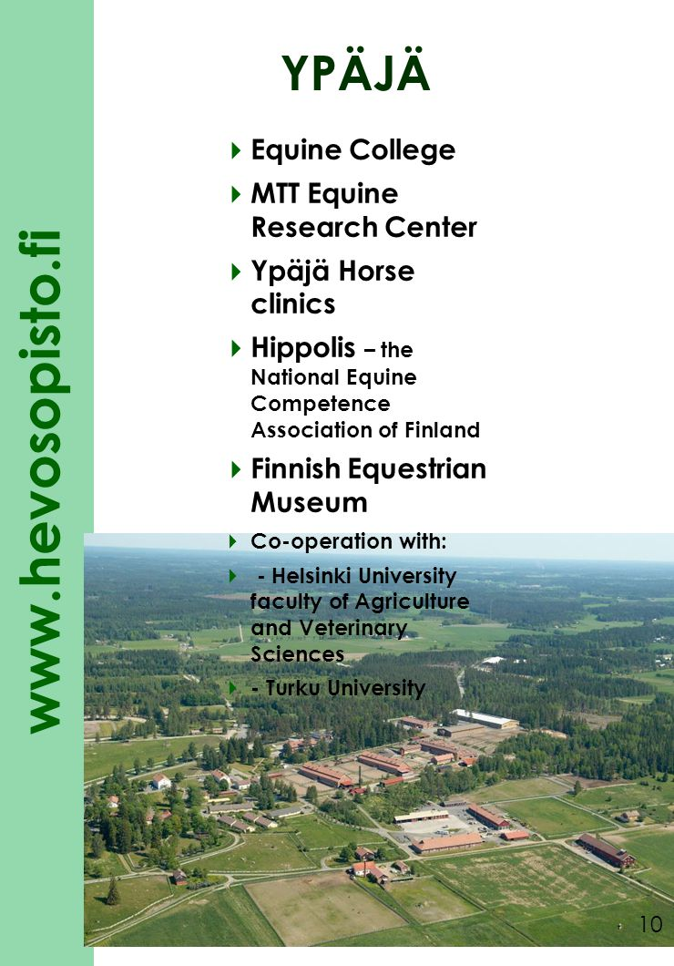 www.hevosopisto.fi 10 YPÄJÄ  Equine College  MTT Equine Research Center  Ypäjä Horse clinics  Hippolis – the National Equine Competence Association of Finland  Finnish Equestrian Museum  Co-operation with:  - Helsinki University faculty of Agriculture and Veterinary Sciences  - Turku University