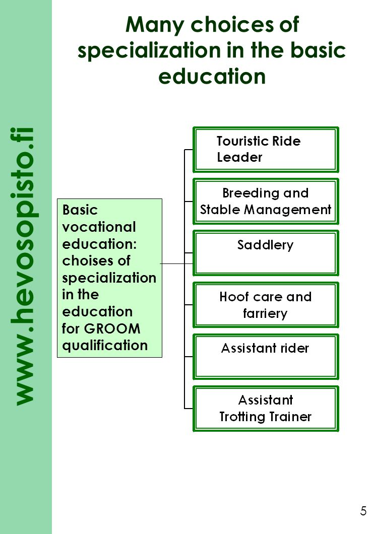 www.hevosopisto.fi 5 Basic vocational education: choises of specialization in the education for GROOM qualification Many choices of specialization in the basic education Touristic Ride Leader