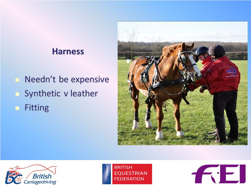 Harness Needn't be expensive Needn't be expensive Synthetic v leather Synthetic v leather Fitting Fitting