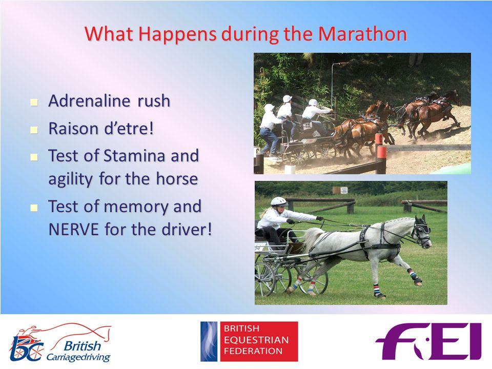 What Happens during the Marathon Adrenaline rush Adrenaline rush Raison d'etre.